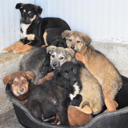 Covid-19 : continuez d'aider nos chiens