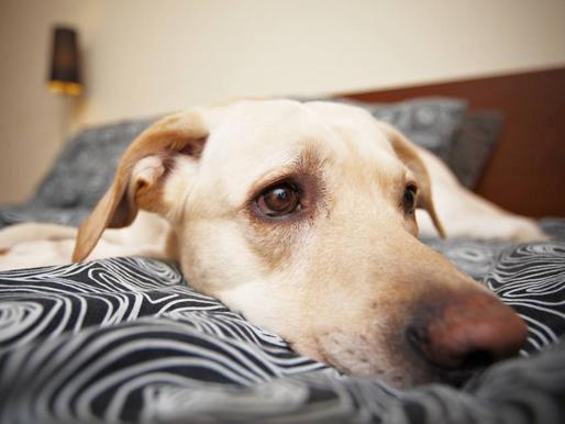 Le chien et la solitude