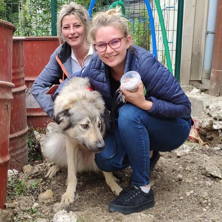 4 juillet 2020 : 38 chiens et 1 chat sauvés de Roumanie