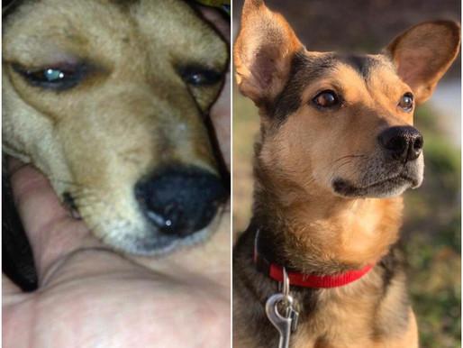 Zelda, chienne roumaine, devenue princesse Suisse