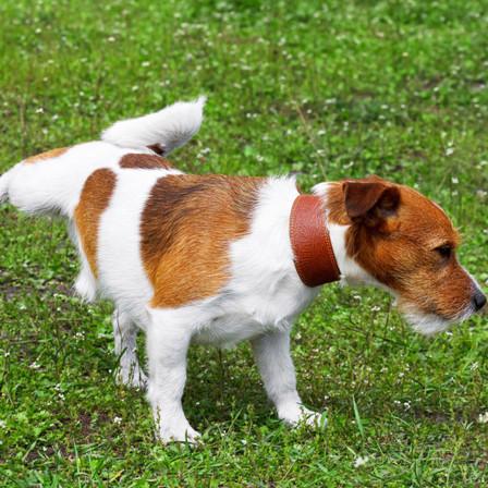 Éducation du chien : tout savoir sur l'apprentissage de la propreté