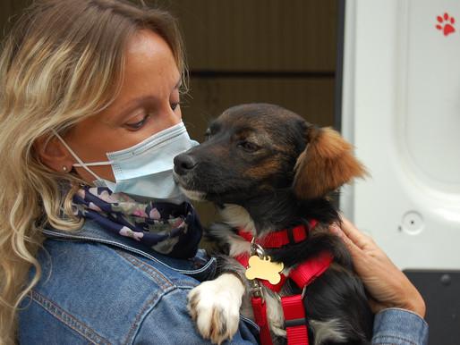 6 juin 2020 : 77 chiens et 2 chats sauvés de Roumanie