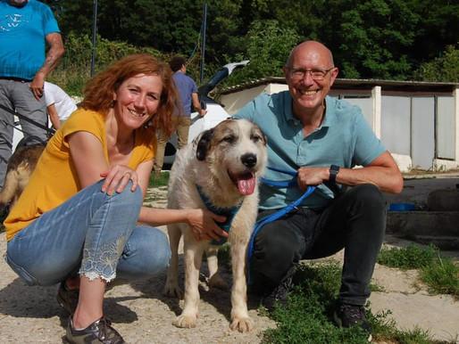 24 juillet 2021 : 22 chiens sauvés