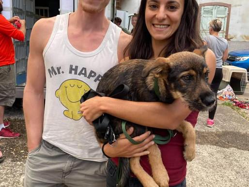 1 août 2020 : 34 chiens sauvés