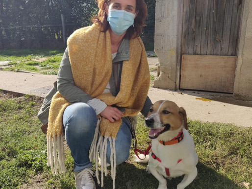 10 octobre 2020 : 12 chiens sauvés