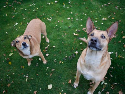 La rencontre entre chiens & la préparation d'une bonne cohabitation
