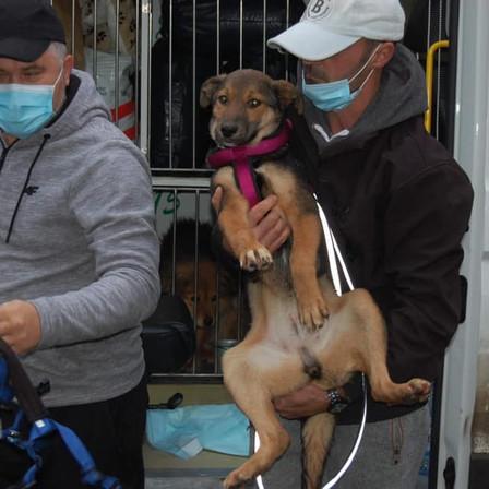 19 décembre 2020 : 40 chiens sauvés