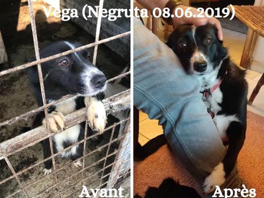 26 août 2021 - Journée mondiale du chien