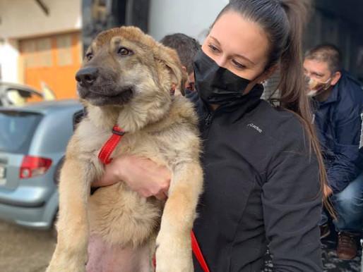 20 février 2021 : 49 chiens sauvés