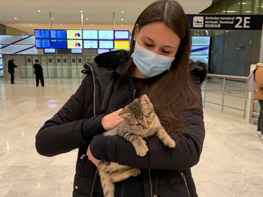 29 novembre 2020 : 1 chat sauvé