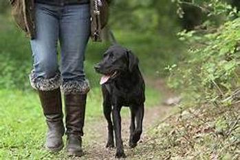 walking a dog.jpg