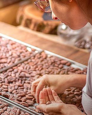 majucau-selecionando-cacau-chocolate-03_