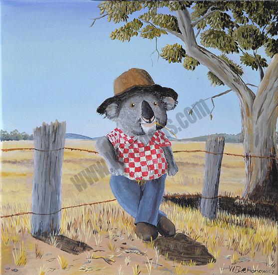 The Aussie Koala