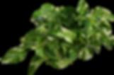 epipremnum-plant-png-image-transparent-b