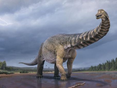 새로 발견된 공룡 종류가 가장 많은 호주