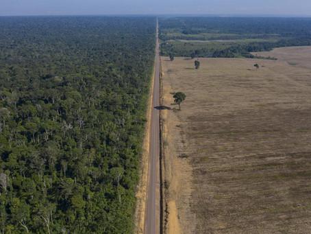 브라질, 삼림 벌채 퇴치를 위해 아마존에 군대 재배치