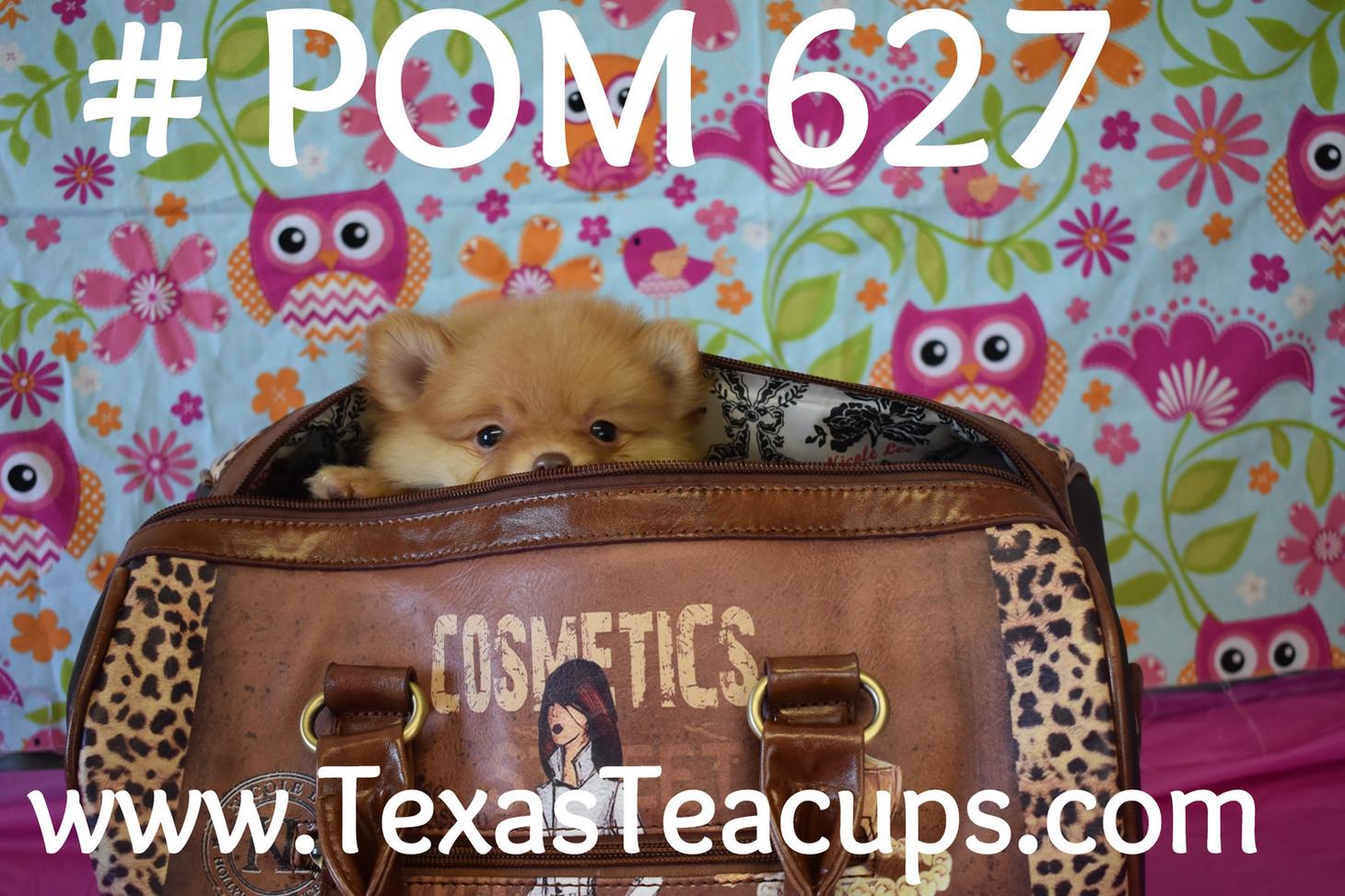 627 puppy pom (5)_edited.jpg