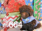 664 Poodle (13)_edited.jpg