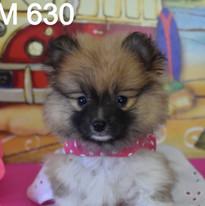 630 puppy pom (3)_edited.jpg