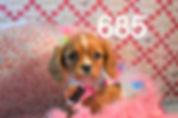 685 (1)_edited.jpg
