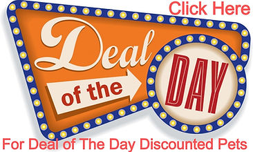 Deal-of-the-Day-Discounted-Puppies.jpg
