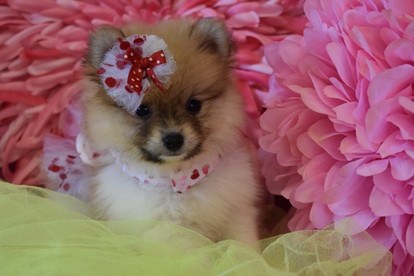 puppy pom 631 (3).JPG