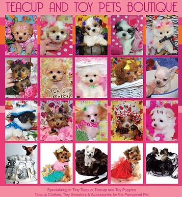 Teacup and Toy Pets Boutique.jpg