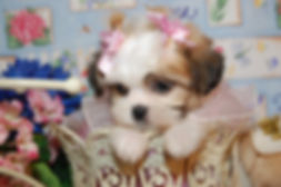 Daisy 2341 012-X3.jpg