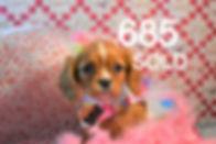 685%20(1)_edited_edited.jpg