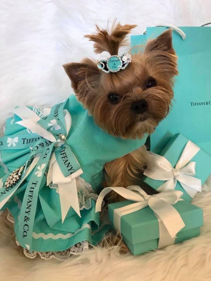sniffany dog dress.jpg