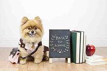 Free Puppy Training.jpg