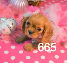 665 Cavalier (3)_edited.jpg