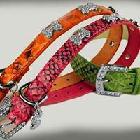 Snakeskin Fashion Bone Collar