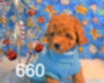 660 Malti Poo (13)_edited.jpg