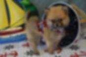 628 puppy pom (9).JPG