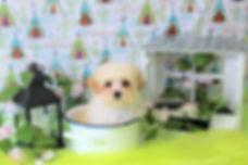 Daisy Puppy # 603