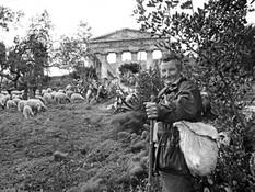 Segesta - Sicilian shepherd