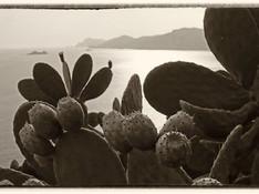 Praiano - Prickly Pear