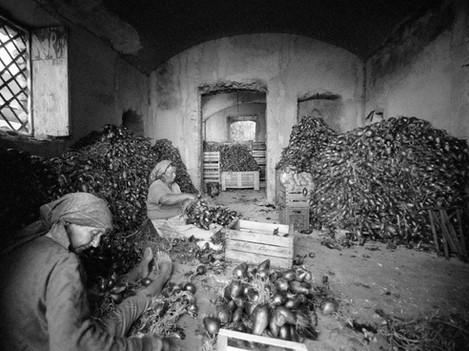 Tropea - Sweet onions