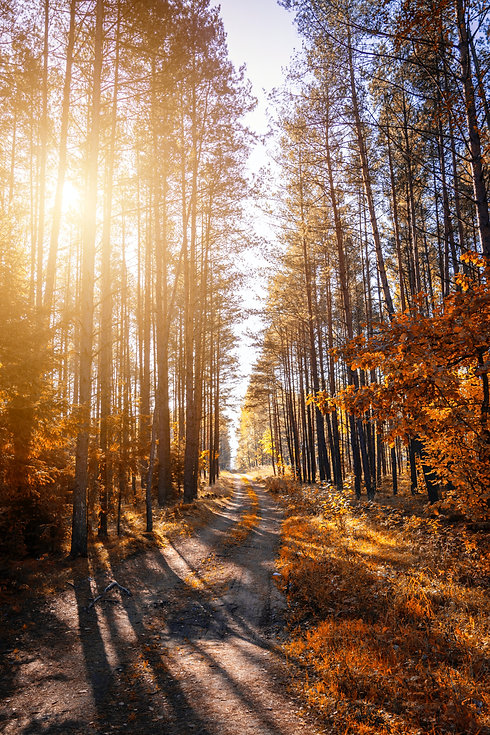 photo-of-a-pathway-in-a-forest-1496373.j