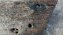Ship timber discovered at Lissadell Beach