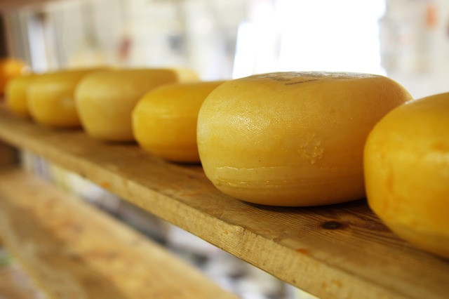 Cheese wheel manufacturing