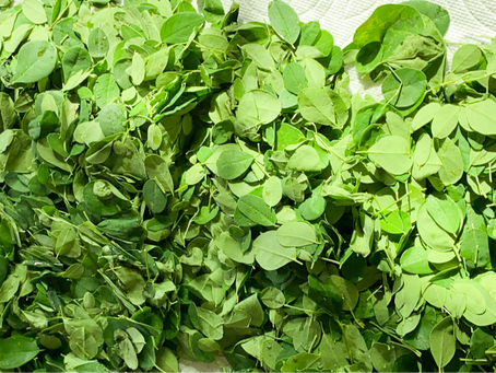 Know Your Ingredients - MORINGA