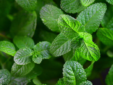 Know Your Ingredients - PEPPERMINT