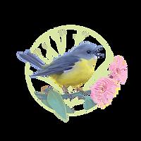 SCC-Robin_logo384x384.png