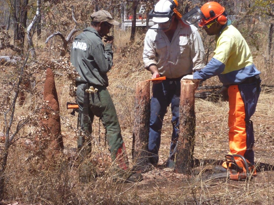 INLOC Chainsaw Training (2)