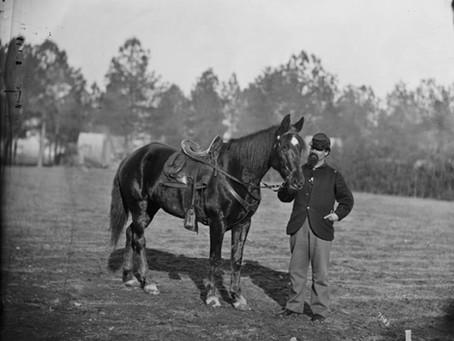Tartar: An Incredible War Horse