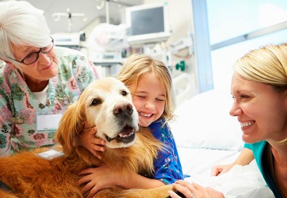 Pet terapia - Alivita Refeições Coletivas