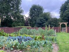 veg garden 1.jpg