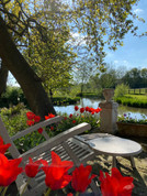 Tulip mania by the moat